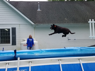Try Dock Diving at K9 Splash Klub .......