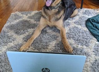 Video Chat - Private Lessons - New to Puppy-Wuppy
