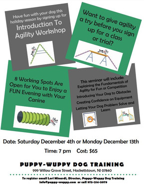 Seminar - Into To Agility for Fun or Competition