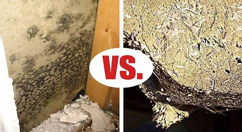 asbestos-vs-mold1.jpg