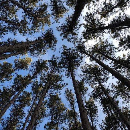 FOREST THERAPY: MORE THAN JUST A WALK IN THE PARK
