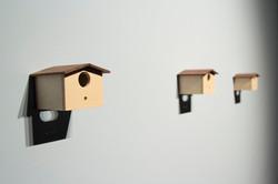 Casa de passarinho, 2015