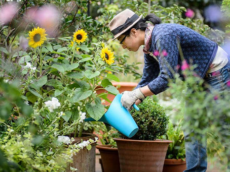 Could gardening be the secret cure for post traumatic stress disorder?