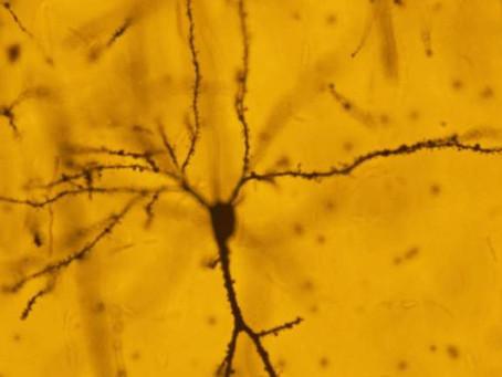 New insights into how the brain responds to trauma
