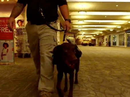 Veteran With PTSD Gets a New 'Leash' on Life After He's Given a Service Dog