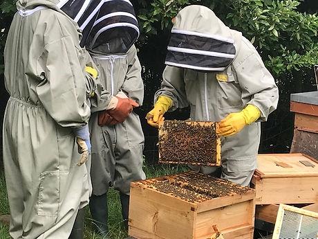 Bee in Company 7.jpg