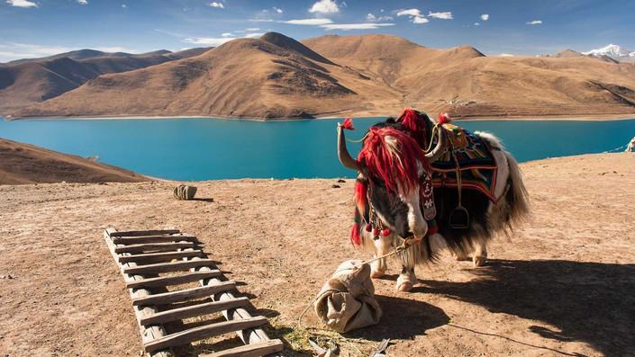Tibet wildlife