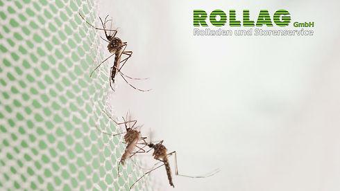 ROLLAG_INSEKT_HD_P002.jpg