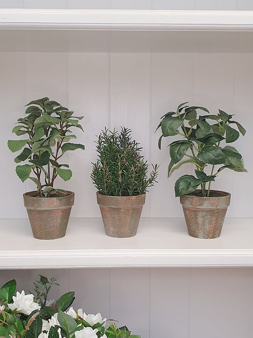 Potted Herb Plant Set