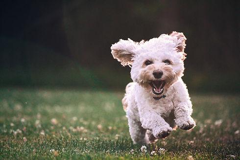 Hundephysiotherapie Berlin