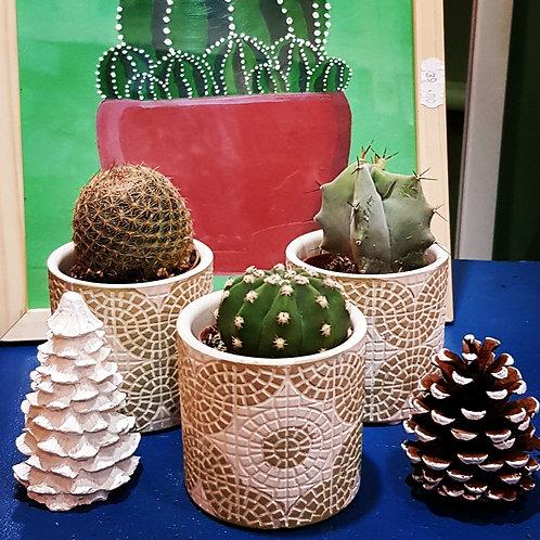 Lot 3 cactus pots de 5 cm - cache pot non compris