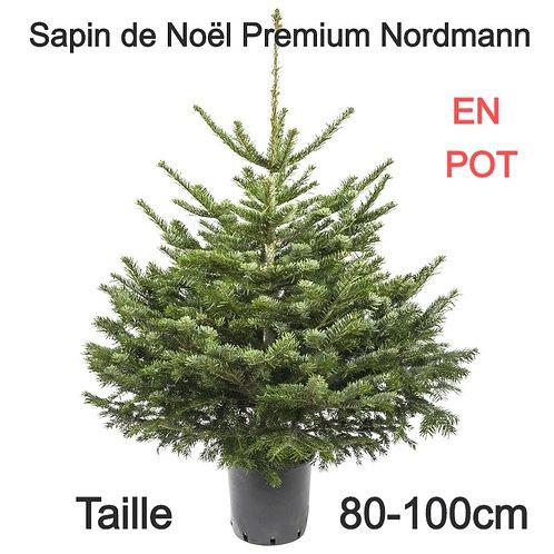 Sapin de Noël Naturel en POT - Variété Nordmann - 80-100cm