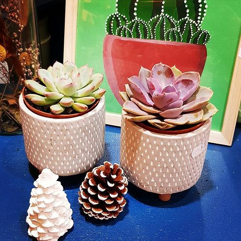Lot 2 succulentes pots de 8 cm - cache pot non compris