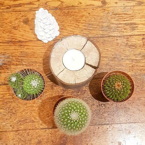 Lot 3 cactus pots de 5 cm