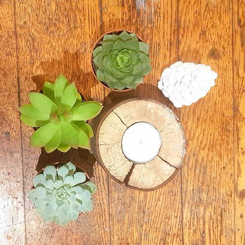 Lot 3 succulentes pots de 5 cm