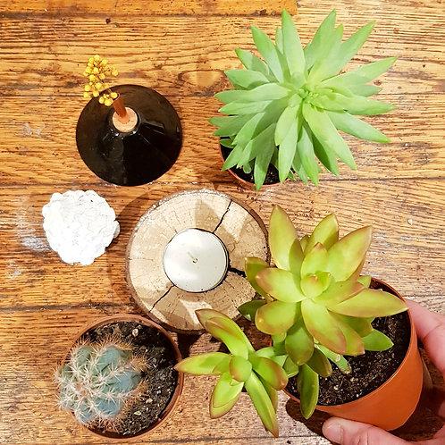 Lot 3 succulentes et cactus pots de 9 et 5cm