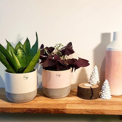 Cache pot Céramique - Graphique blanc ou rose pâle diamètre 10,5cm