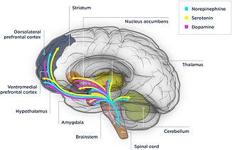 Neurologista em Curitiba - Depressão tratamento