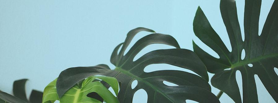 Tropical%20Leaves_edited.jpg