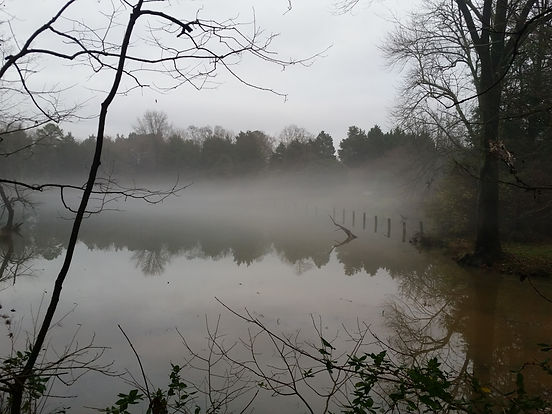 pond-1625059.jpg
