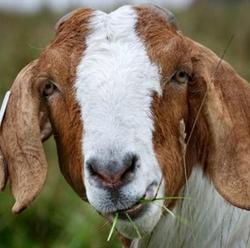 Flawless Body Works Goat Milk