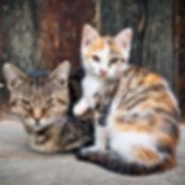 Feral cats.jpg