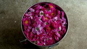 roses dans cuve.jpg