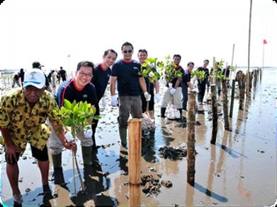 mangrove2.png