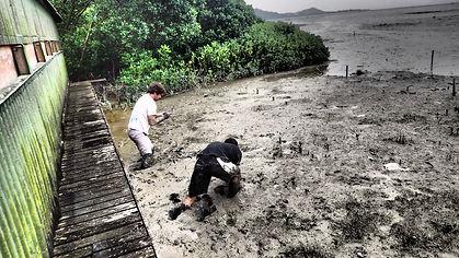 mangrove 4.jpg