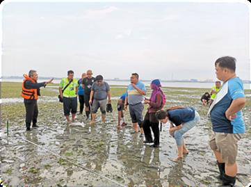 mangrove5.png