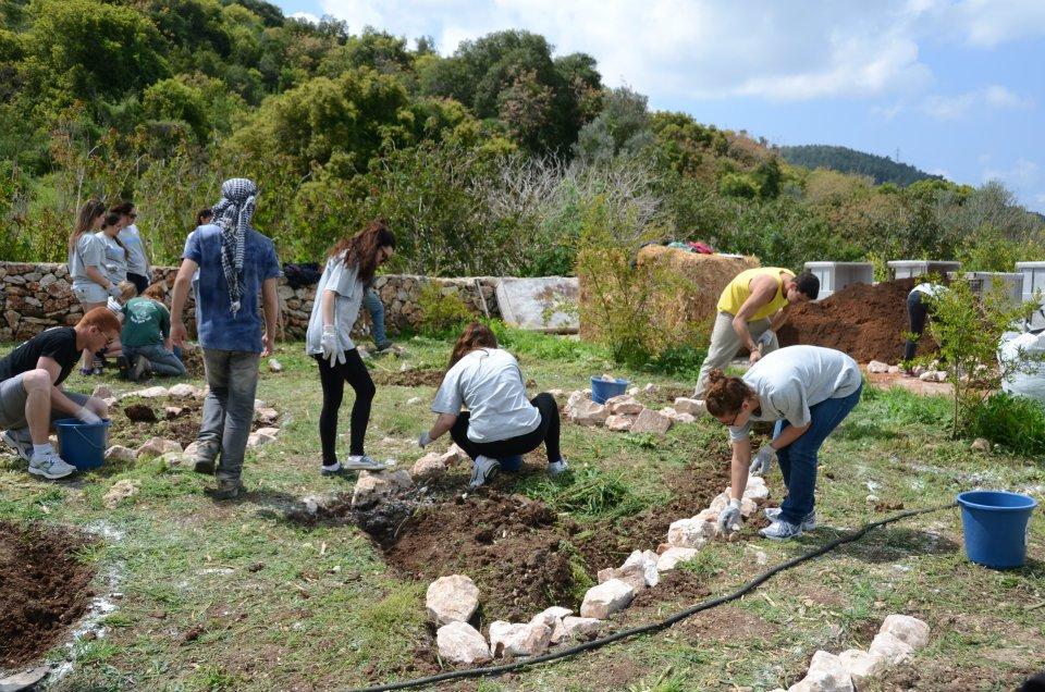 הקמת גן ירק 2