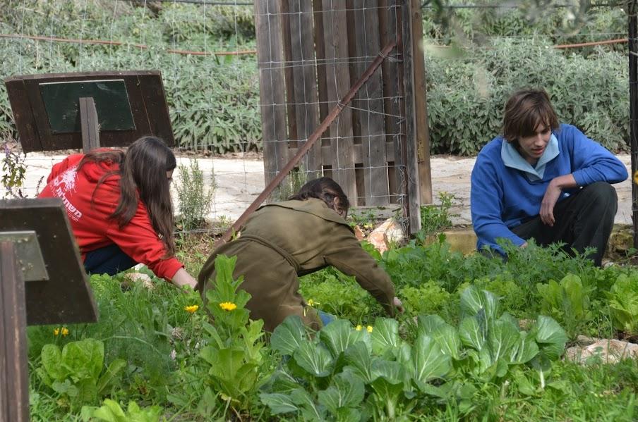 עבודה בגן הירק
