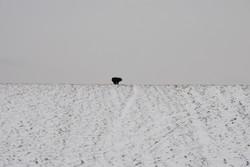 1-beyond-the-dike-sead-kazanxhiu-2017 (3)
