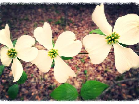 Bling, Blang, Bloom!