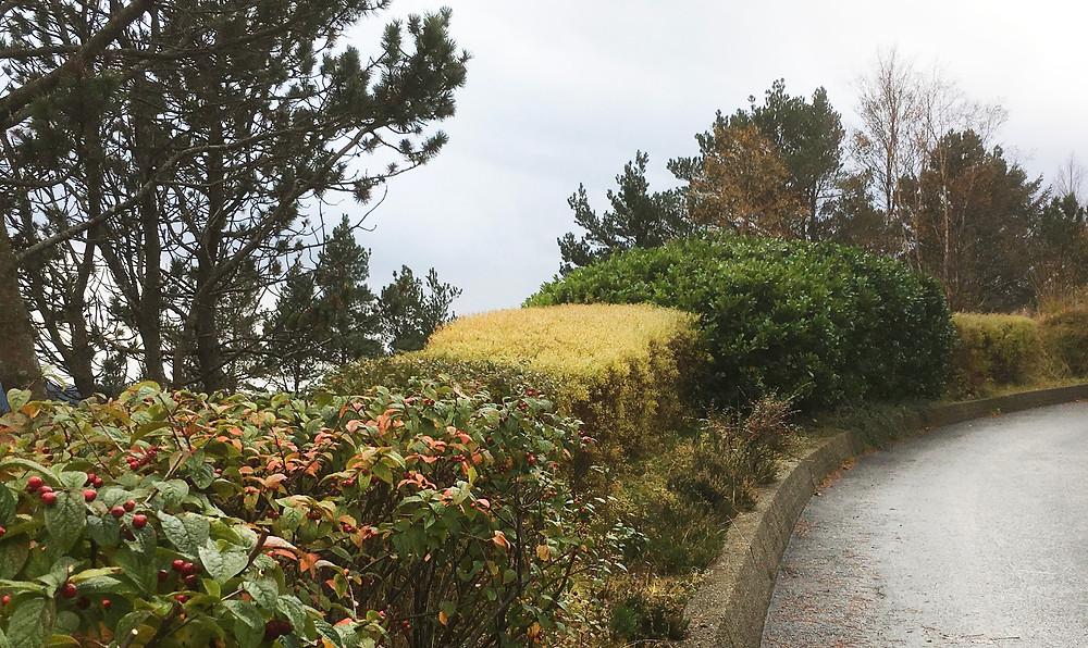 Tid for hage: plant en hekk