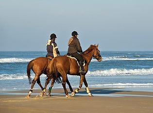 Castleview Equestrian