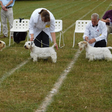 Dog Class Winners