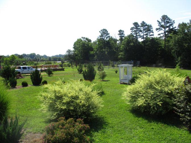 Meditation Garden in bloom