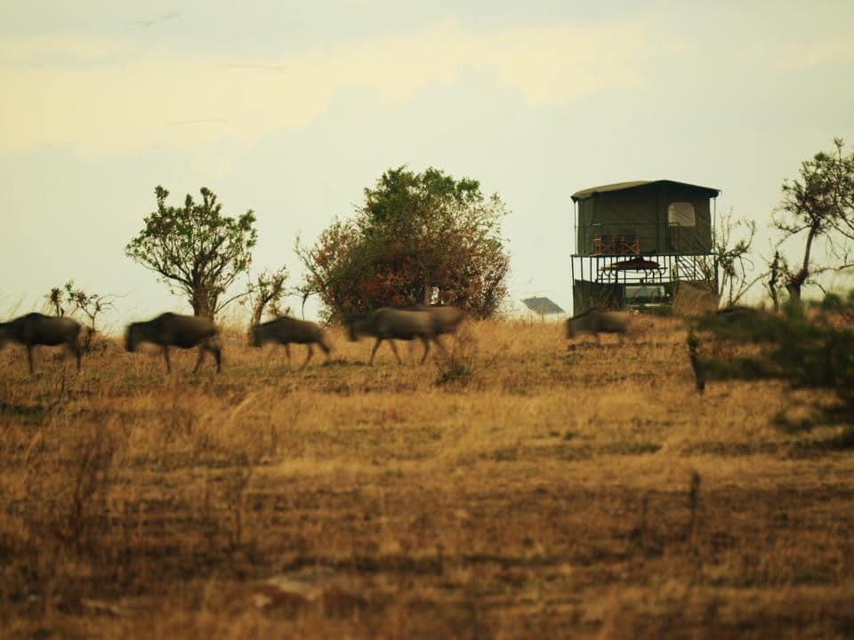 Tent With A View accommodation in Tanzania