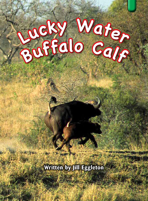 Lucky Water Buffalo Calf