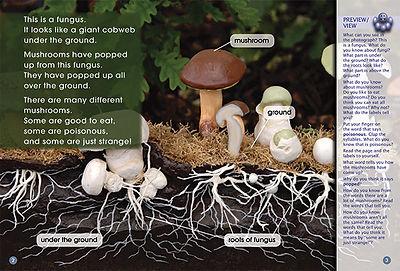 Up Pops a Mushroom