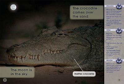 A Crocodile Mother
