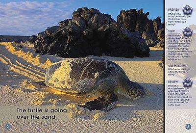 Turtle's Journey