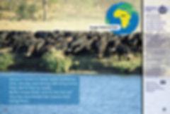 Lucky Water Buffalo Calf