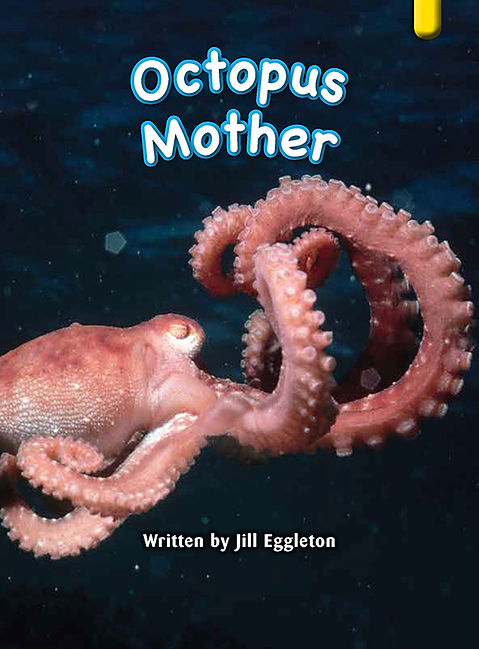 Octopus Mother