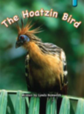 The Hoatzin Bird