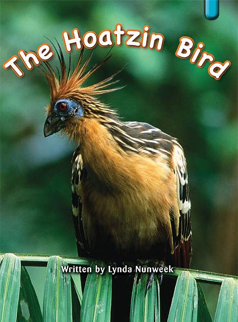 The Hoatzin Bird