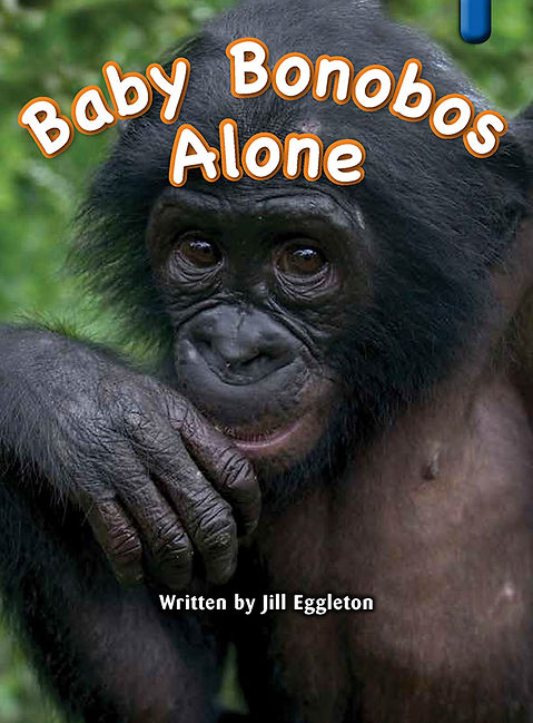 Baby Bonobos Alone