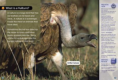 The Griffon Vulture