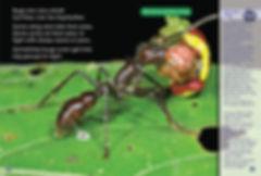 Bully Bugs